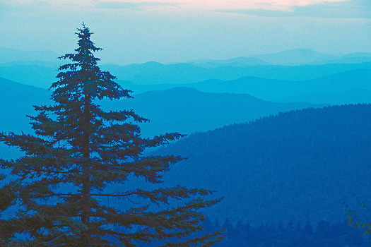 Fir tree silhouetted against blue mountain