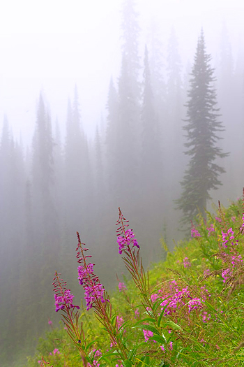 Hillside with pink flowers in misty forest setting