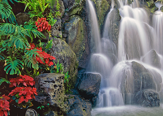 Waterfall over rocks with red flowers in foreground