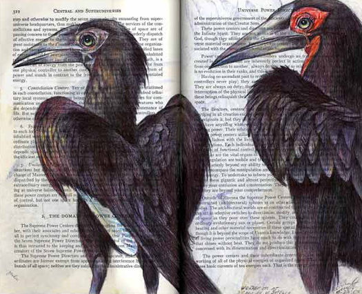 African Hornbills (Bucorvus) by Fred Smith