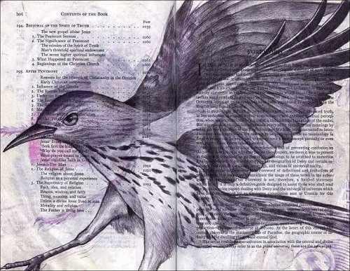 Mockingbird (Mimus polyglottos) by Fred Smith