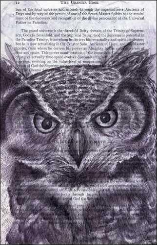 Owl (Strigiformes) by Fred Smith