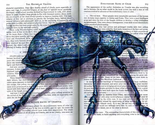 Blue Weevil (Cyprus angustus) by Fred Smith
