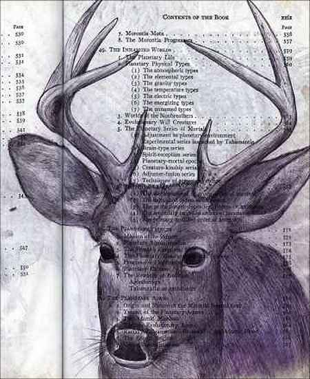 Deer Buck (Odocoileus virginianus) by Fred Smith