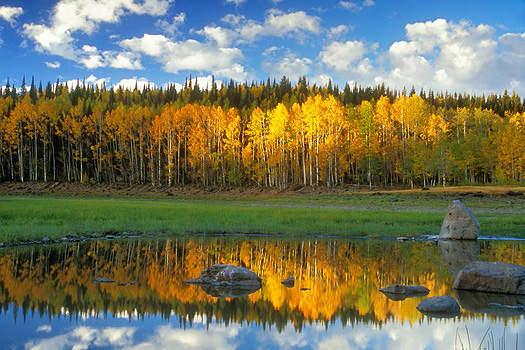 Sunlit Fall tress reflected in pond