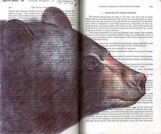 Black Bear (Ursus americanus) by Fred Smith