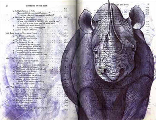 Black Rhinoceros (Diceros bicornis) by Fred Smith
