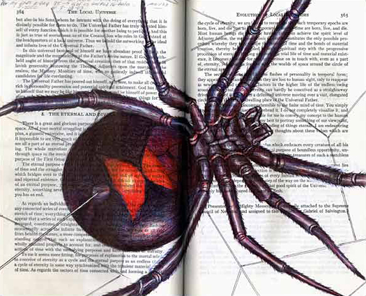 Black Widow (Latrodectus mactans) by Fred Smith