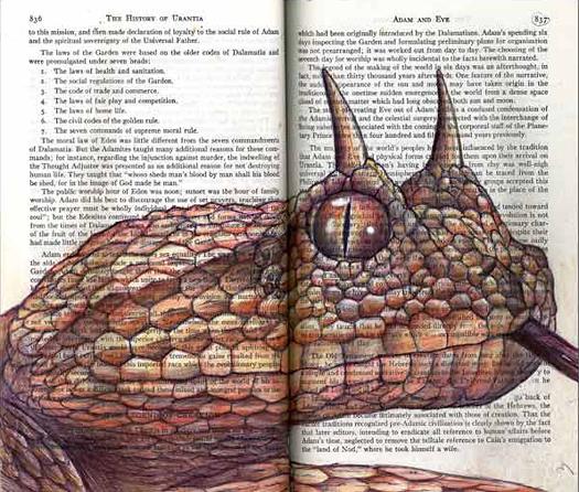 Desert Horned Viper (Cerastes cerastes) by Fred Smith