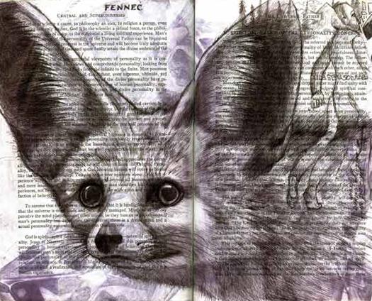 Fennec Fox (Vulpes zerda) by Fred Smith