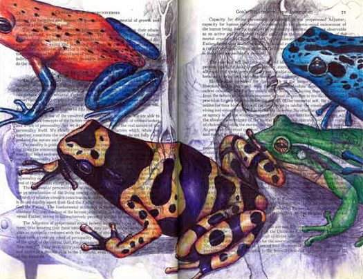Four Colorful Frogs by Fred Smith