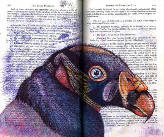 King Vulture (Sacrohamphus papa) by Fred Smith
