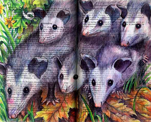 Oppossum Family (Didelphis virgiaiana) by Fred Smith