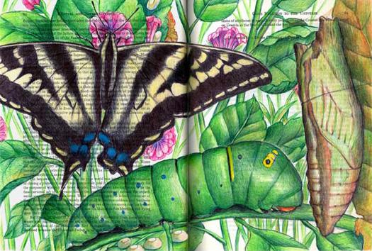 Pale Swallowtail (Papillo eurymedon) by Fred Smith