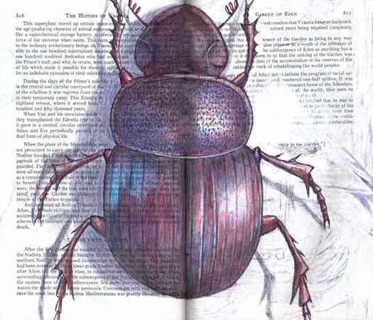 Scarab Beetle (Scarabaeidae  family) by Fred Smith