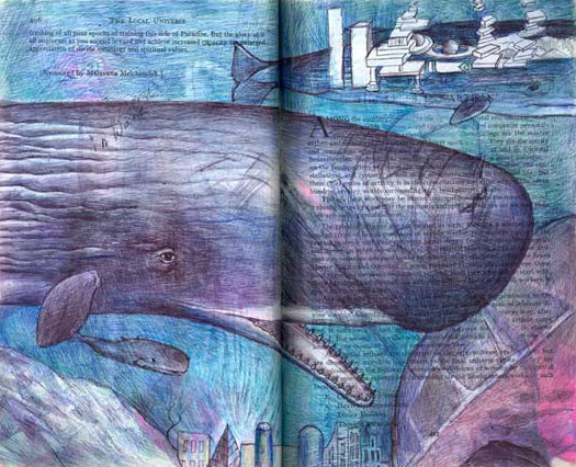 Sperm Whale (Physeter macrocephalus) by Fred Smith