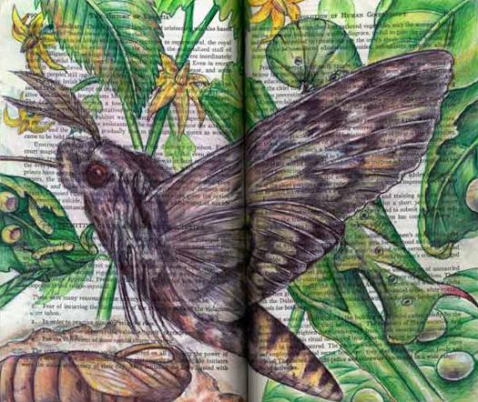 Tobacco Horn Sphinx Moth (Manduca sexta) by Fred Smith
