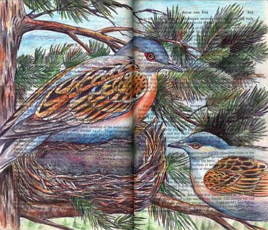 Turtle Doves (Streptopelia turtur) by Fred Smith