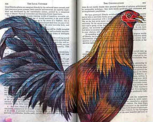 French cockerel rooster (Gallus gallus) by Fred Smith