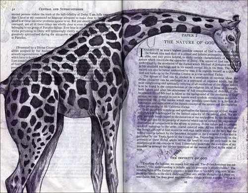 Giraffe (Giraffa camelopardalis) by Fred Smith