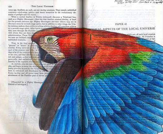 Green Wing Macaw (Ara chloroptera) by Fred Smith