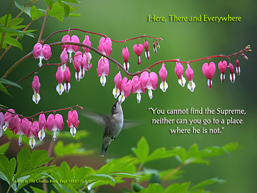Here, There and Everywhere - Quote of the Day - Supreme, Taoism