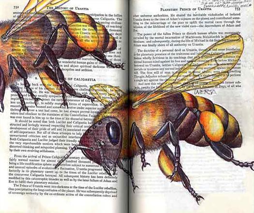 Honey Bee (Apis mellifera) by Fred Smith