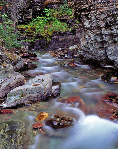 A stream in the forest of Glacier National Park
