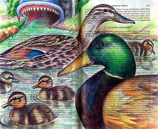 Mallard family (Anas platyrhynchos) by Fred Smith