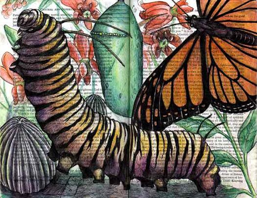 Monarch Butterfly (Danaus plexippus) by Fred Smith