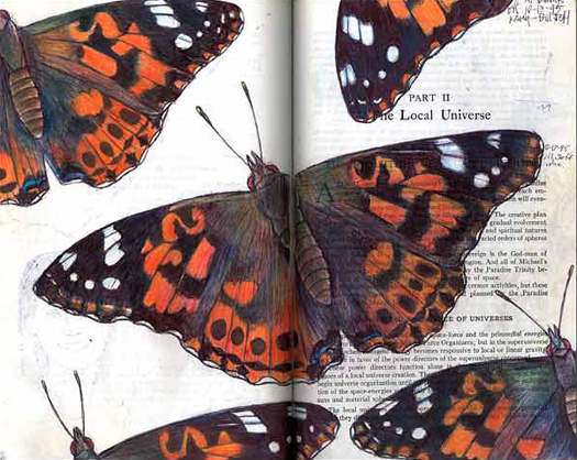 Painted Ladies (Vanessa cardui) by Fred Smith