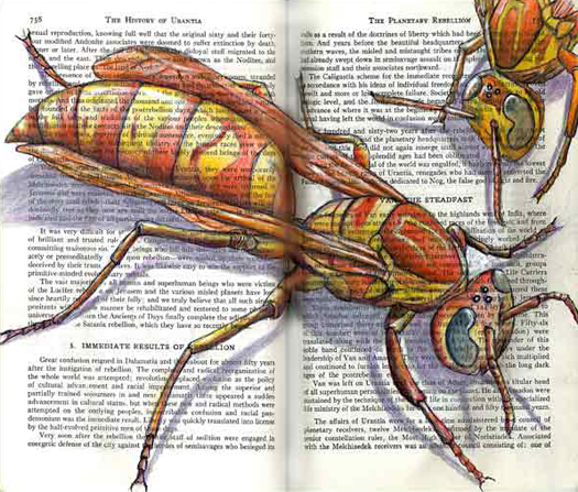 Paper Wasp (Polistes apaches) by Fred Smith