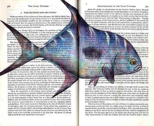 Permit Fish (Trachinotus falcatus) by Fred Smith