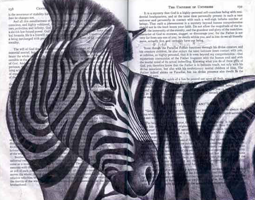 Zebra (Equus grevyi) by Fred Smith
