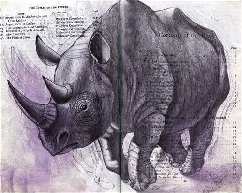 Rhinoceros (Rhinocerotidae) by Fred Smith