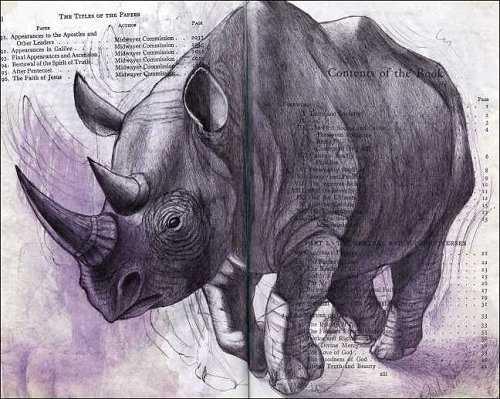 Rhinoceros (Rhinocerotidae) by Fred Smith