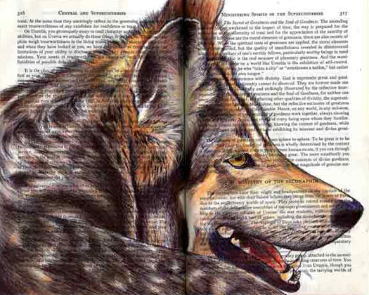 Gray Wolf (Canis lupus) by Fred Smith