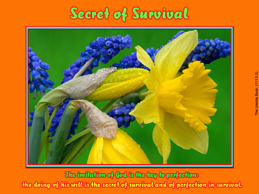 Secret of Survival