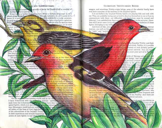 Western Scarlet Tanagers (Piranga ludoviciana) by Fred Smith
