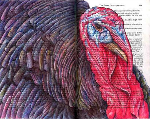 Wild Turkey (Meleagris galloparo) by Fred Smith