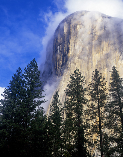 The El Capitan formation and fog photographed from the floor of Yosemite Valley in Yosemite National Park, California.
