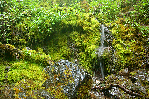 waterfall in a Pacific Northwest forest on the Olympic Peninsula on a foggy day