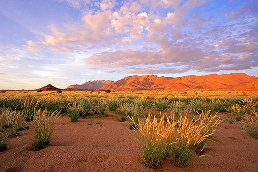 Grassland landscape at sunrise, Brandberg mountain, Namibia