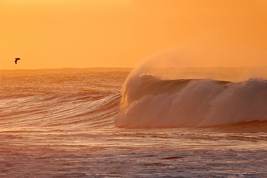 Seascape at sunset with large waves and a seagull