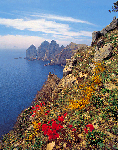 Nature view - seashore, rocky cliffs, hillside of flowers