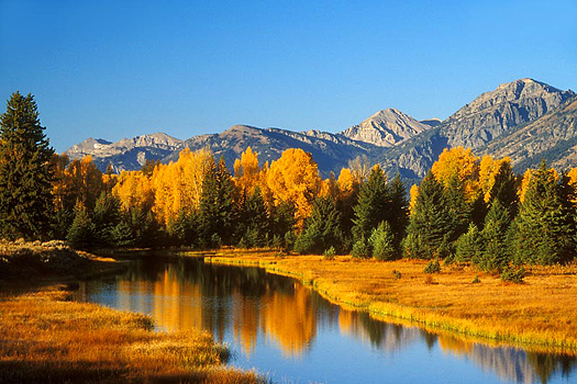 Autumn forest, yellow and green, reflected in river against a mountain background and blue sky