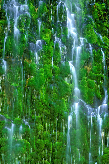 A cascading waterfall through a green mossy wall