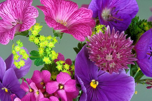 A group of colorful flowers in close-up