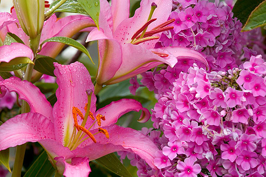 Assorted pink flowers in bloom