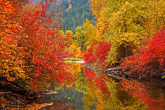 a reflecting pool with Fall trees on its banks